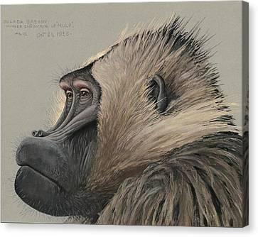 Gelada Baboon Canvas Print