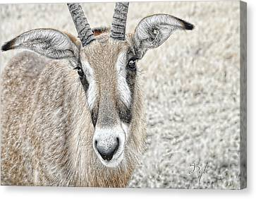 Canvas Print featuring the photograph Young Oryx by Dyle   Warren