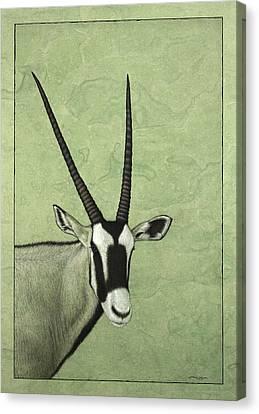 Gemsbok Canvas Print