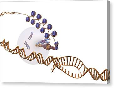 Gene Expression, Artwork Canvas Print by Science Photo Library