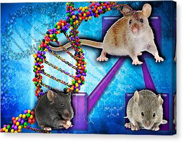 Gene Expression In Mice Canvas Print