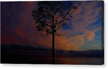 Genesis Tree Canvas Print by Stephen Melcher