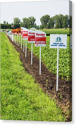 Genetically Modified Crop Signs Canvas Print