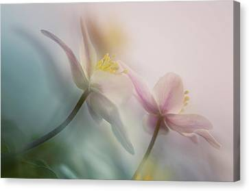 Pastel Canvas Print - Gentle by Anton Van Dongen
