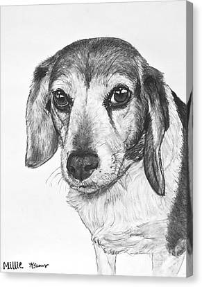 Gentle Beagle Canvas Print