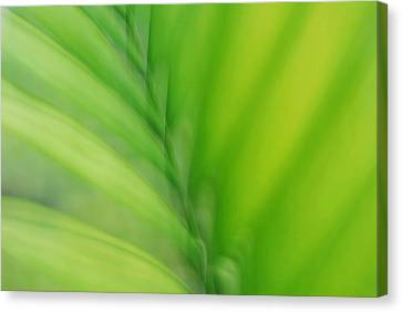 Canvas Print featuring the photograph Gentle Breeze by Lorenzo Cassina