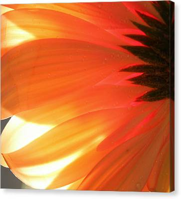 Gentle Flame Canvas Print