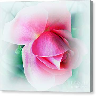 Gentleness And Grace Canvas Print by Judy Palkimas