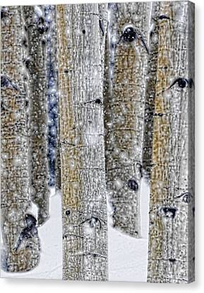 Gently Falling Forest Snow Canvas Print by Don Schwartz