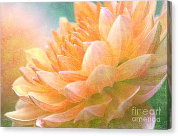Gently Textured Dahlia  Canvas Print