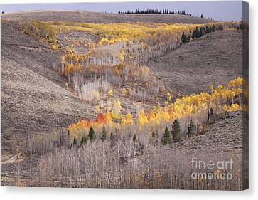 Geometric Autumn Patterns In The Rockies Canvas Print by Kate Purdy