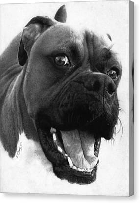 George - Boxer Dog Canvas Print by Justin Clark