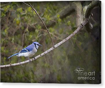 Georgia Bluejay In Spring Canvas Print by Cris Hayes