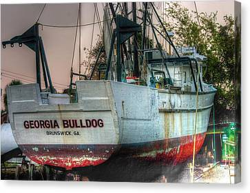 Canvas Print featuring the photograph Georgia Bulldog by Dennis Baswell