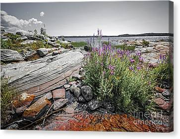 Georgian Bay Iv Canvas Print by Elena Elisseeva