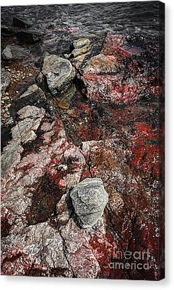 Georgian Bay Rocks Abstract II Canvas Print