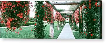 Geranium And Rose Vines Along A Walkway Canvas Print