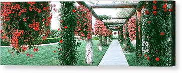 Geranium And Rose Vines Along A Walkway Canvas Print by Panoramic Images