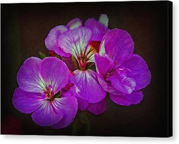 Canvas Print featuring the photograph Geranium Blossom by Hanny Heim