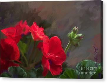Geranium In Red Canvas Print