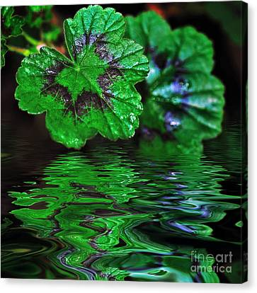 Geranium Leaves - Reflections On Pond Canvas Print