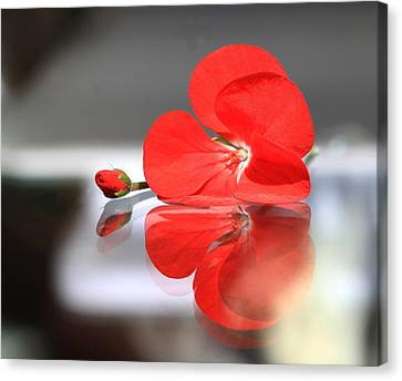 Geranium Reflections Canvas Print by  Andrea Lazar