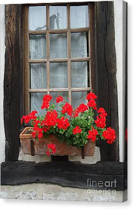 Geraniums In Timber Window Canvas Print