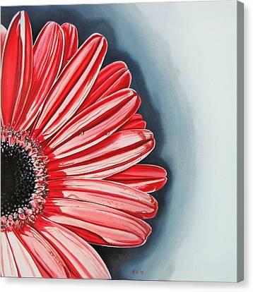 Gerber Daisy 2 Canvas Print by Kevin F Heuman