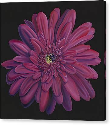Gerber Daisy Canvas Print by Kerri Meehan