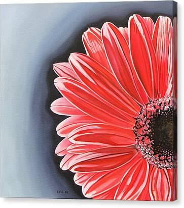 Gerber Daisy Canvas Print by Kevin F Heuman