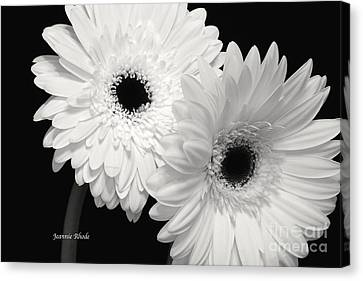 Canvas Print featuring the photograph Gerbera Daisy Sisters by Jeannie Rhode