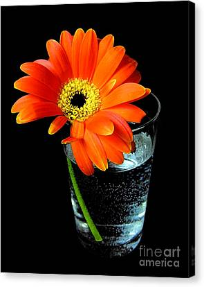 Gerbera Daisy In Glass Of Water Canvas Print by Nina Ficur Feenan