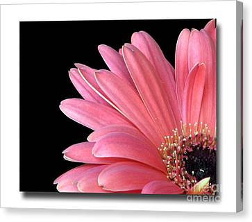 Canvas Print featuring the photograph Gerbera Encore by Chris Anderson