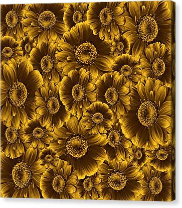 Cabin Wall Canvas Print - Gerbera Flowers Awash In Sepia   by David Dehner