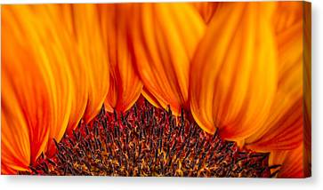 Canvas Print featuring the photograph Gerbera On Fire by Adam Romanowicz