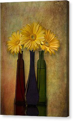 Gerbera Trio Canvas Print by Susan Candelario