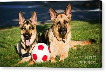 Canvas Print featuring the photograph German Shepherd Sisters by Eleanor Abramson