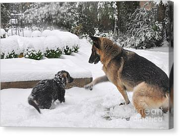 Canvas Print featuring the photograph German Shepherds Playing In The Snow by Tanya  Searcy