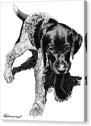 German Shorthair Canvas Print by Rob Christensen
