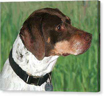 German Shorthaired Pointer Canvas Print by Paul Tagliamonte