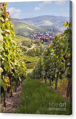 German Vineyard Canvas Print by Sharon Foster
