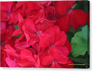 Germaniums Canvas Print