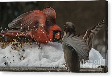 Get Off My Feeder Canvas Print