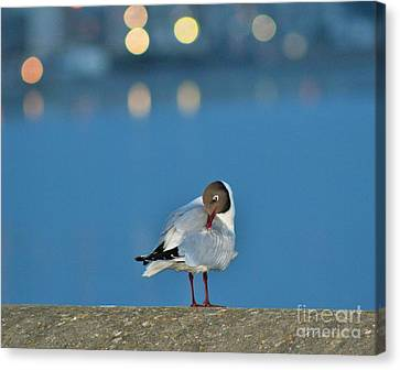 I Am Ready... Canvas Print