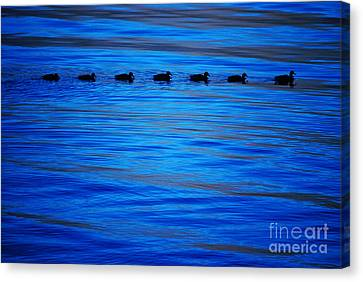 Canvas Print featuring the photograph Getting Your Ducks In A Row by Cynthia Lagoudakis