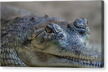 Gharial Smile Canvas Print by Ruth Jolly