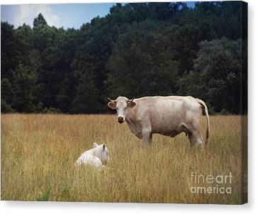 Ghost Cow And Calf Canvas Print