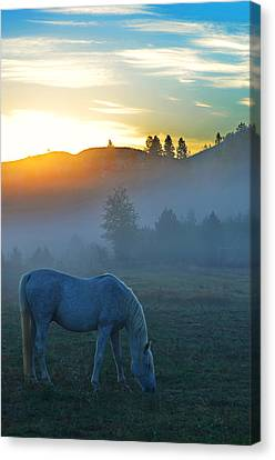 Ghost Horse Canvas Print by Annie Pflueger