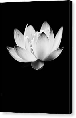 Canvas Print featuring the photograph Ghost Lotus by Priya Ghose