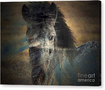 Ghost Pony Canvas Print by Irma BACKELANT GALLERIES